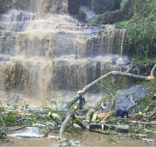가나 킨탐포 폭포에 쓰러진 거대한 나무들 [가나 스타FM 온라인 화면 캡처]