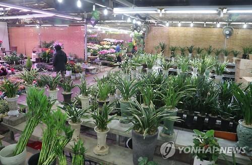 지난 1월 썰렁한 서울 양재동 꽃시장[연합뉴스 자료사진]