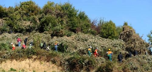 숲가꾸기에 나선 산림청[연합뉴스 자료사진]