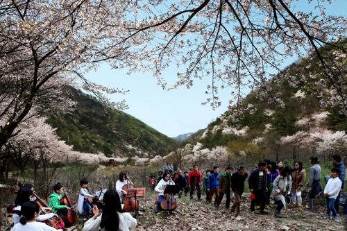 지난해 열린 '비단고을 산꽃축제'