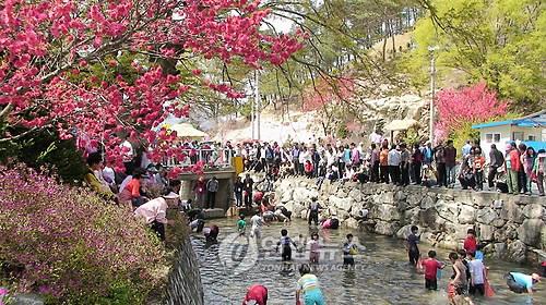 금산 홍도화축제 [연합뉴스 자료사진]