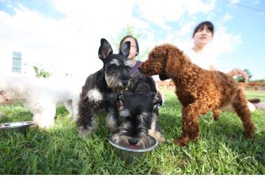 사료 먹는 강아지들