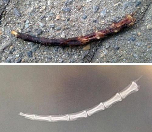 사라진 길고양이들, 불탄 꼬리뼈…일산서 무슨일이