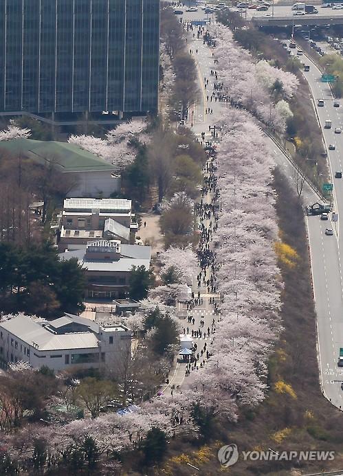 지난해 여의도 벚꽃축제 [연합뉴스 자료사진]