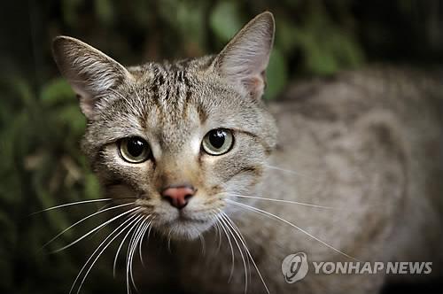 '생태계 폭군' 들고양이…다람쥐·토끼·꿩 '싹쓸이'