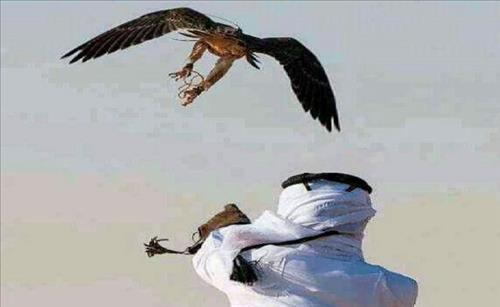 매를 이용해 사냥하는 아랍인