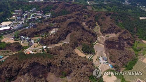 강릉 산불 피해지역 모습 [연합뉴스 자료사진]