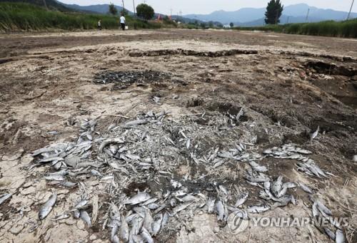 가뭄에 물고기 떼죽음
