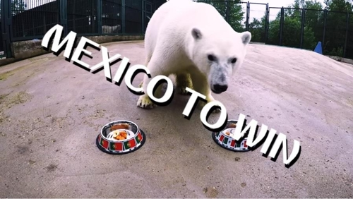 멕시코 승리 점친 북극곰 니카. 멕시코는 포르투갈과 비겼다.