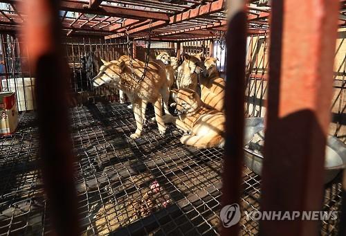 미 하원서 '개·고양이 고기 유통금지' 결의안 발의