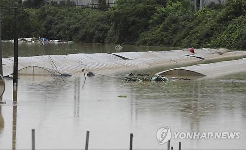 지붕만 보이는 비닐하우스[연합뉴스 자료사진]