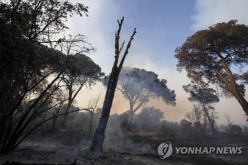 화염에 휩싸인 카스텔푸사노 소나무 숲 [EPA=연합뉴스]