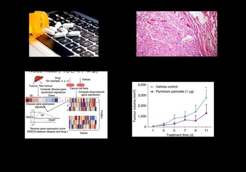 구충제로 암세포 사멸…빅데이터 이용 신약 재창출...한·미 공동 연구팀