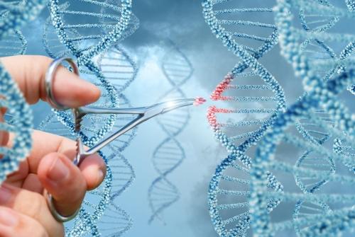 美, 최초 인간 배아 유전자 편집