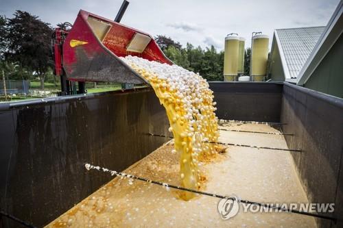 네덜란드서 폐기되는 '살충제 오염 계란' [연합뉴스 자료사진]