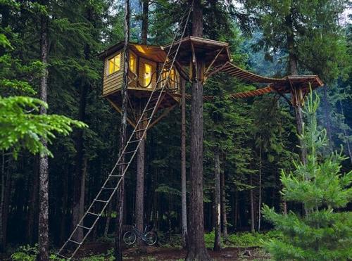 '캐빈 폰'에 등장한 나무 위의 집
