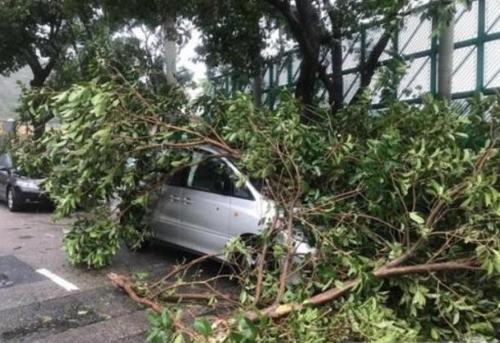 초강력 태풍 '하토'에 홍콩·마카오 마비… 5명 사망(종합)