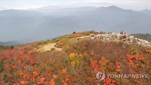 설악산 단풍[연합뉴스 자료사진]