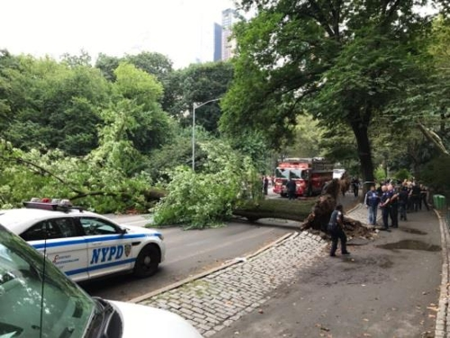 지난달 15일 센트럴파크에서 쓰러진 나무