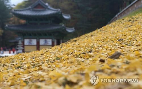 치악산 구룡사의 가을[연합뉴스 자료사진]