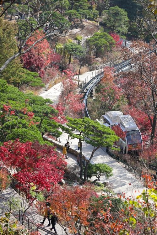 붉은 단풍과 조화를 이루는 소나무정원(성연재기자)