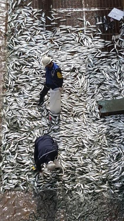 조선소 도크에 가득찬 물고기 떼