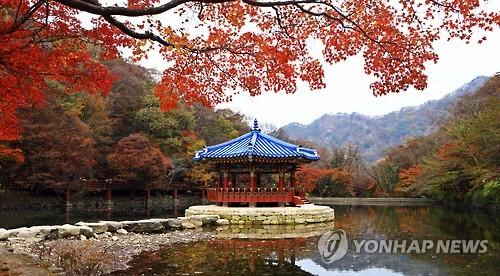 내장산 단풍 [연합뉴스 자료사진]