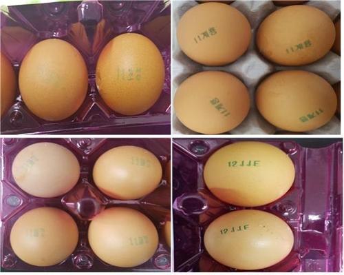 살충제 성분 검출 계란 4건
