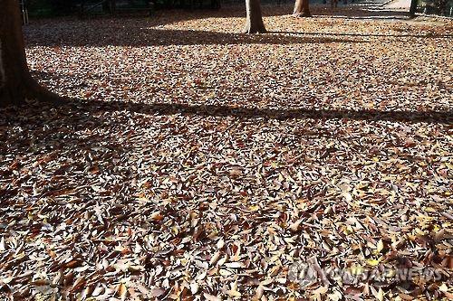 낙엽 쌓인 거리 [연합뉴스 자료사진]