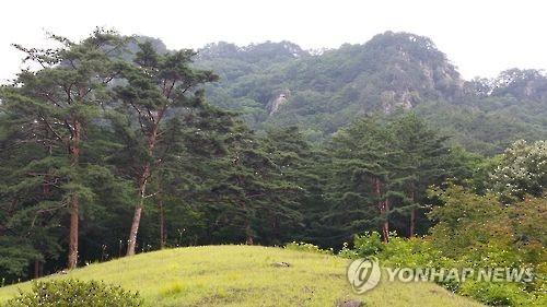 영월군 무릉도원면 사자산[연합뉴스 자료사진]