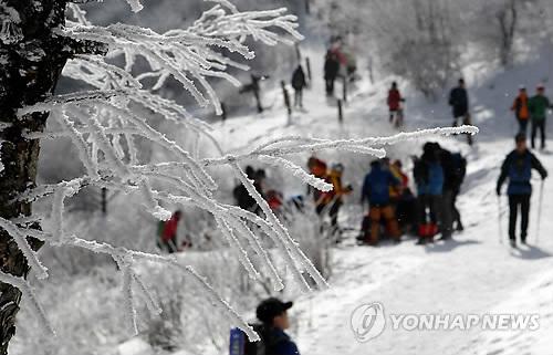 태백산 눈꽃산행[연합뉴스 자료사진]