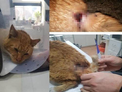 꼬리·척추 손상된 길고양이