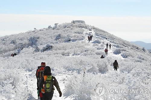 태백산 눈꽃 산행[연합뉴스 자료사진]