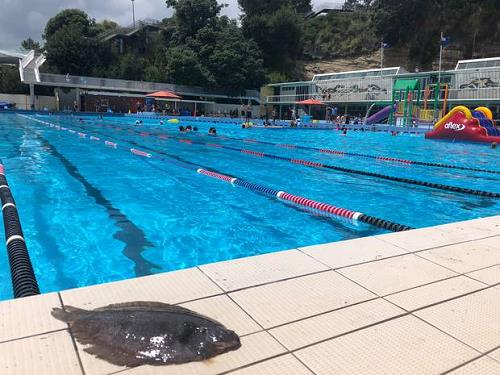 야외 수영장에 떨어진 넙치 [출처: 뉴질랜드헤럴드]