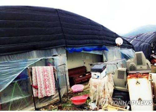 농업이주노동자가 쓰는 비닐하우스 숙소 [연합뉴스 자료사진]