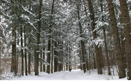 오대산국립공원 전나무숲길