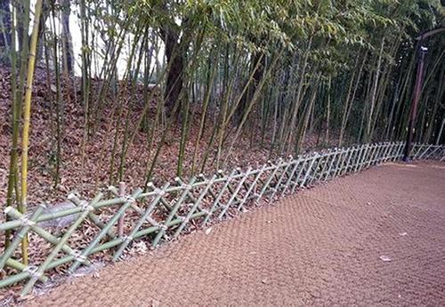 태화강 대나무 울타리