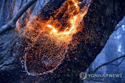 시뻘건 불씨 토해내는 삼척 도계 산불