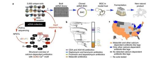 미국 연구팀, '슈퍼박테리아'를 잡을 가능성이 있는 새 항생물질 '말라시딘' 발견