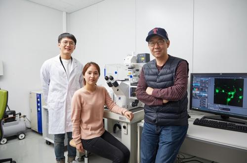 민경태·김경태 교수팀, 뇌 발달 핵심 원리 규명