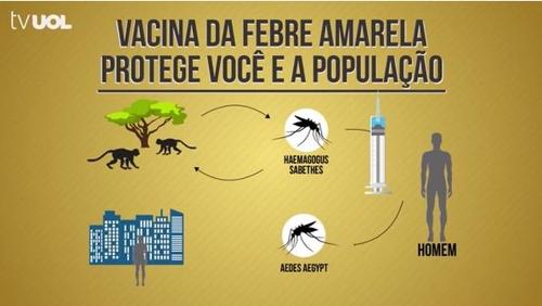 황열병 감염 경로를 알리는 브라질 TV 방송 [브라질 뉴스포털 UOL]
