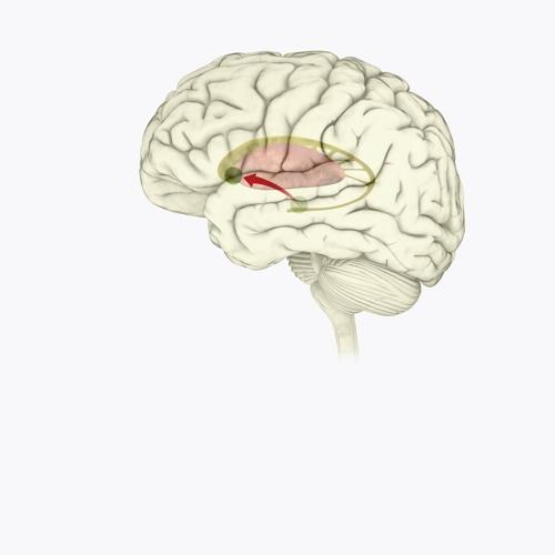 뇌와 도파민