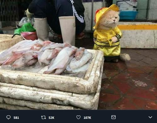 베트남서 생선 파는 고양이 [트위터 화면 캡처]