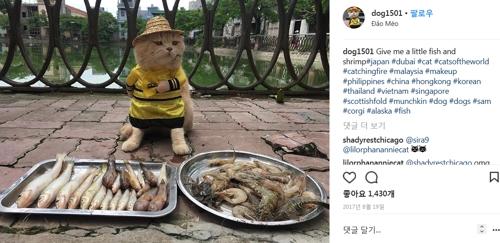 생선 파는 고양이 [인스타그램 화면 캡처]