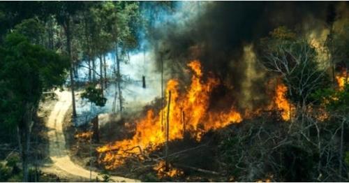 불타는 아마존