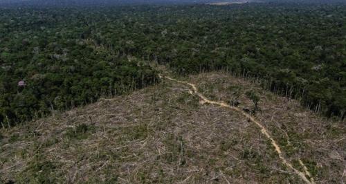 불법벌목으로 사라진 아마존 열대우림 [브라질 뉴스포털 UOL]