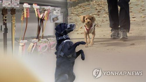 반려견[연합뉴스TV 제공]