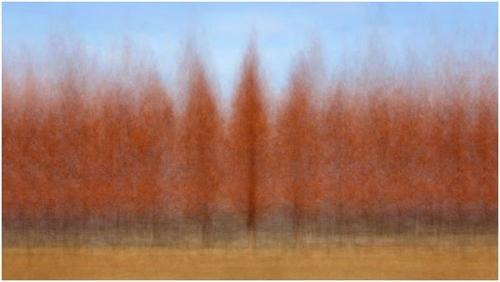 엄효용, 담순로 메타세쿼이아, 면종이에 피그먼트 프린트, 80x142cm, 2015