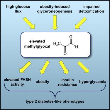 """""""2형(성인)당뇨병 증상을 일으키는 원인은 고혈당이 아닌 메틸글리옥살(MG)"""""""