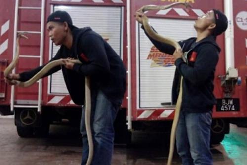 뱀 조련으로 유명해진 말레이 소방관, 코브라에 물려 사망